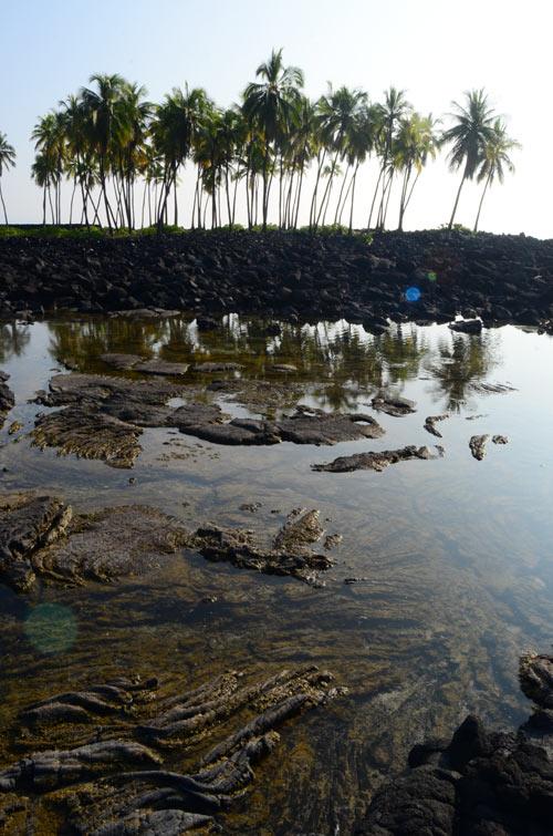 puuhonua-bay-palms