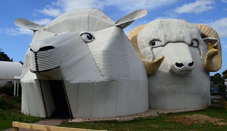 tirau-sheep