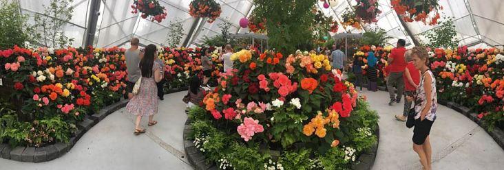 begonia-exhibit